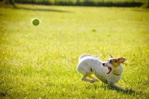 hund bellt im zwinger